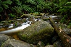 Río de la montaña con las rocas y los helechos de árbol grandes Imagen de archivo