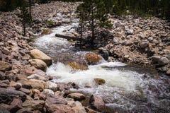 Río de la montaña con los rápidos Naturaleza de Rocky Mountains Imágenes de archivo libres de regalías