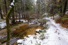 Río de la montaña, corriente, cala con los rápidos en el último otoño, invierno temprano con nieve, garganta vintgar, Eslovenia imagen de archivo