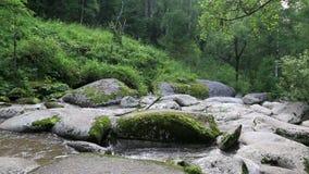 Río de la montaña de Belokurikha en Altai Krai almacen de video