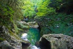 Río de la montaña en barranco en el medio del bosque verde, piedras cubiertas con el musgo Imagenes de archivo