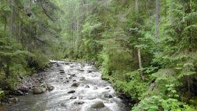 Río de la montaña en bosque almacen de metraje de vídeo