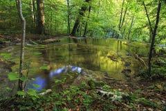 Río de la montaña en el bosque imágenes de archivo libres de regalías