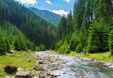 Río de la montaña en el bosque conífero foto de archivo
