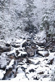 Río de la montaña en el bosque del invierno de la montaña con los árboles y las nevadas nevados Fotos de archivo