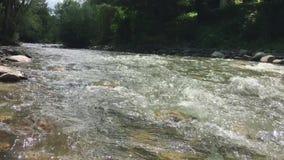 Río de la montaña en el bosque verde almacen de video