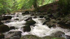 Río de la montaña en el bosque verde almacen de metraje de vídeo