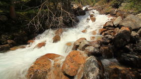Río de la montaña en el cierre del bosque para arriba Verano almacen de metraje de vídeo