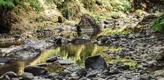 Río de la montaña en el medio del bosque verde Fotos de archivo