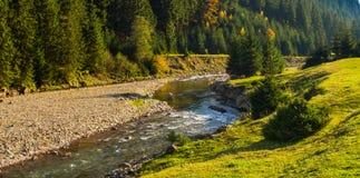 Río de la montaña en el río del theMountain en el bosque conífero fotos de archivo libres de regalías