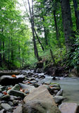 Río de la montaña en la madera Fotos de archivo