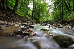 Río de la montaña en la madera Imagenes de archivo
