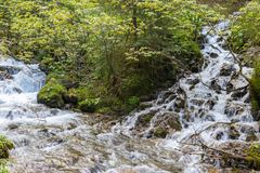 Río de la montaña en las montañas cárpatas fotos de archivo
