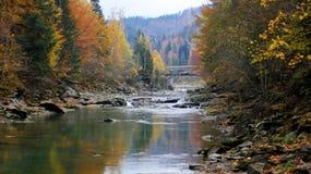 Río de la montaña en los Cárpatos Foto de archivo libre de regalías