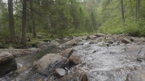 Río de la montaña en tiempo del otoño Orilla rocosa Río que atraviesa a Rocky Mountains metrajes