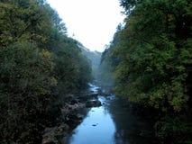 Río de la montaña en un bosque Imagenes de archivo