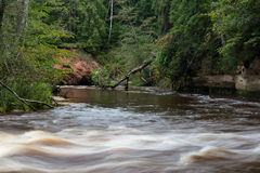 Río de la montaña en verano rodeado por el bosque Foto de archivo libre de regalías