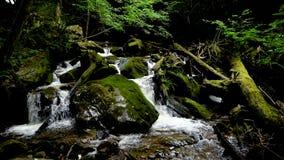 Río de la montaña - fluya atravesando el bosque verde grueso, Bistriski Vintgar, Eslovenia almacen de video