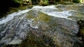 Río de la montaña - fluya atravesando el bosque verde grueso, Bistriski Vintgar, Eslovenia almacen de metraje de vídeo