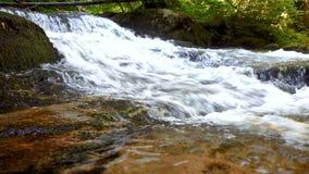 Río de la montaña - fluya atravesando el bosque verde grueso, Bistriski Vintgar, Eslovenia metrajes