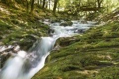Río de la montaña que atraviesa la corriente verde del bosque en la madera Imagen de archivo