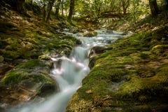 Río de la montaña que atraviesa la corriente verde del bosque en la madera Fotografía de archivo
