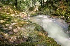 Río de la montaña que atraviesa la corriente verde del bosque en la madera Fotos de archivo