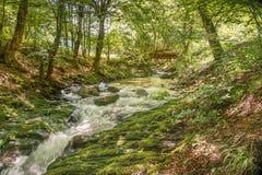 Río de la montaña que atraviesa la corriente verde del bosque en la madera Fotos de archivo libres de regalías