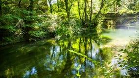 Río de la montaña que fluye en bosque verde pintoresco metrajes