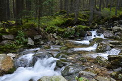 Río de la montaña, Retezat, Cárpatos Rumania Fotografía de archivo libre de regalías