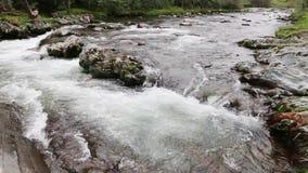 Río de la montaña Riegue las cascadas sobre rocas en el parque nacional de Great Smoky Mountains almacen de metraje de vídeo