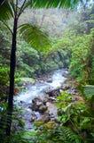 Río de la selva Foto de archivo libre de regalías