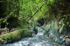 Río de la selva tropical Fotografía de archivo