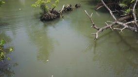 Río de la selva y tiro de los árboles metrajes