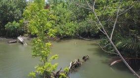 Río de la selva y tiro de los árboles almacen de video