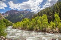 Río de los Animas en Colorado Imagen de archivo libre de regalías