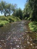 Río de los días soleados Fotografía de archivo