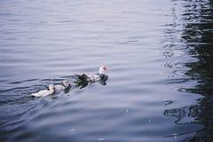 Río de Mondego Imagenes de archivo