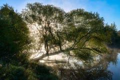 Río de niebla fantástico con la hierba verde fresca y reflexión agradable en la luz del sol imagen de archivo