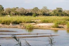Río de Olifants, parque nacional de Kruger, Suráfrica Imágenes de archivo libres de regalías