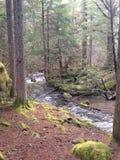 Río de Oregon Fotografía de archivo