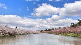 Río de Sakura fotos de archivo libres de regalías