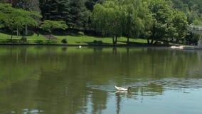 Río de Sandanska Bistritsa que pasa a través de la ciudad de Sandanski almacen de metraje de vídeo