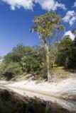 Río de Suwannee Fotos de archivo