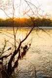 Río de Ticino Fotografía de archivo libre de regalías