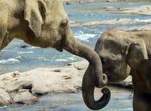 río del baño de los elefantes del beso imagenes de archivo