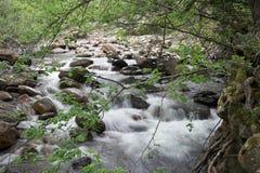 Río del bosque Fotos de archivo