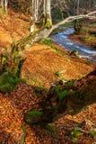 Río del bosque con las piedras y el musgo Imágenes de archivo libres de regalías