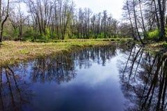 Río del bosque de la primavera con la reflexión en el agua de árboles y de hojas del cielo Región de Voronezh Foto de archivo libre de regalías
