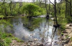 Río del bosque en el día de primavera hermoso Foto de archivo libre de regalías